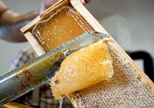 uncapping honey frame