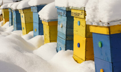 bee hives in winter