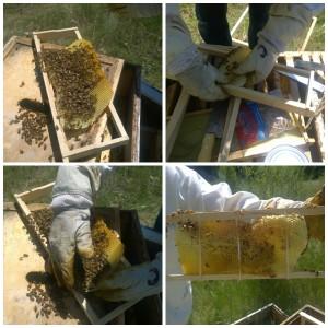 Hive Building