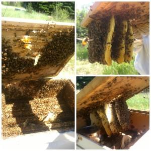 Mega Hive