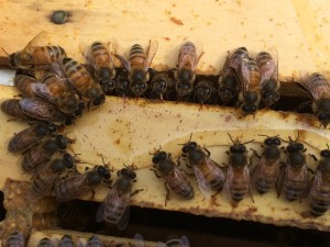 Is this what it looks like inside the hive on Thanksgiving?